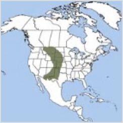 Prairie Dog Range