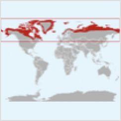 Arctic Fox Range